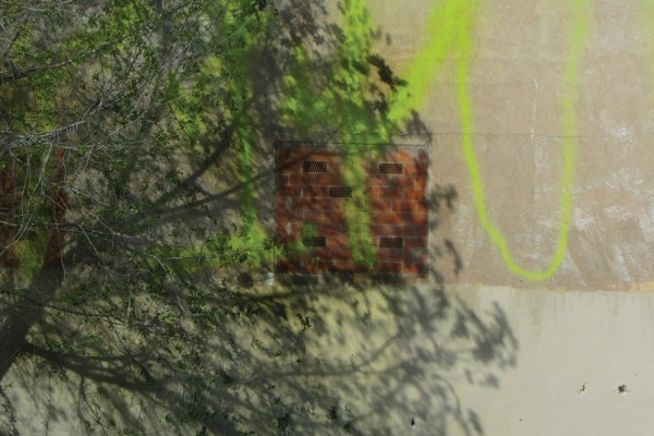 Kate Carr interview, tree partially hiding a brick wall with a bricked-up window and bright yellow graffiti