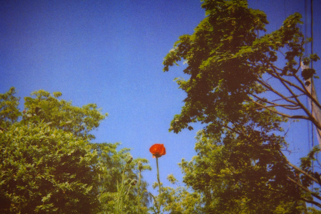 Benoît Pioulard - Sonnets, red flower held up against trees and blue sky