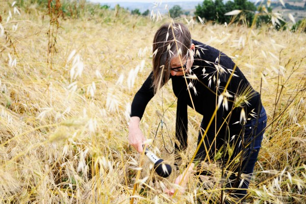 Liminaria, artist recording with a microphone in tall yellow grass