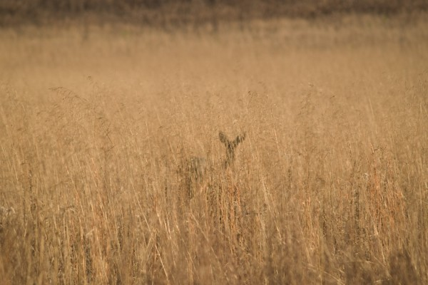 Marianne Schuppe - slow songs, photo of deer in a field by James Thompson