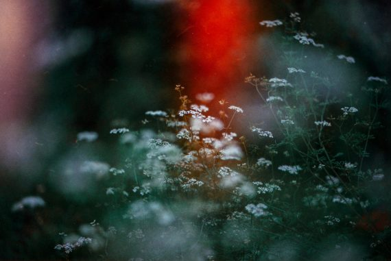 Olli Aarni and Mia Tarkela - Unimetsä, white flowers against a dark background with bright red light leak.