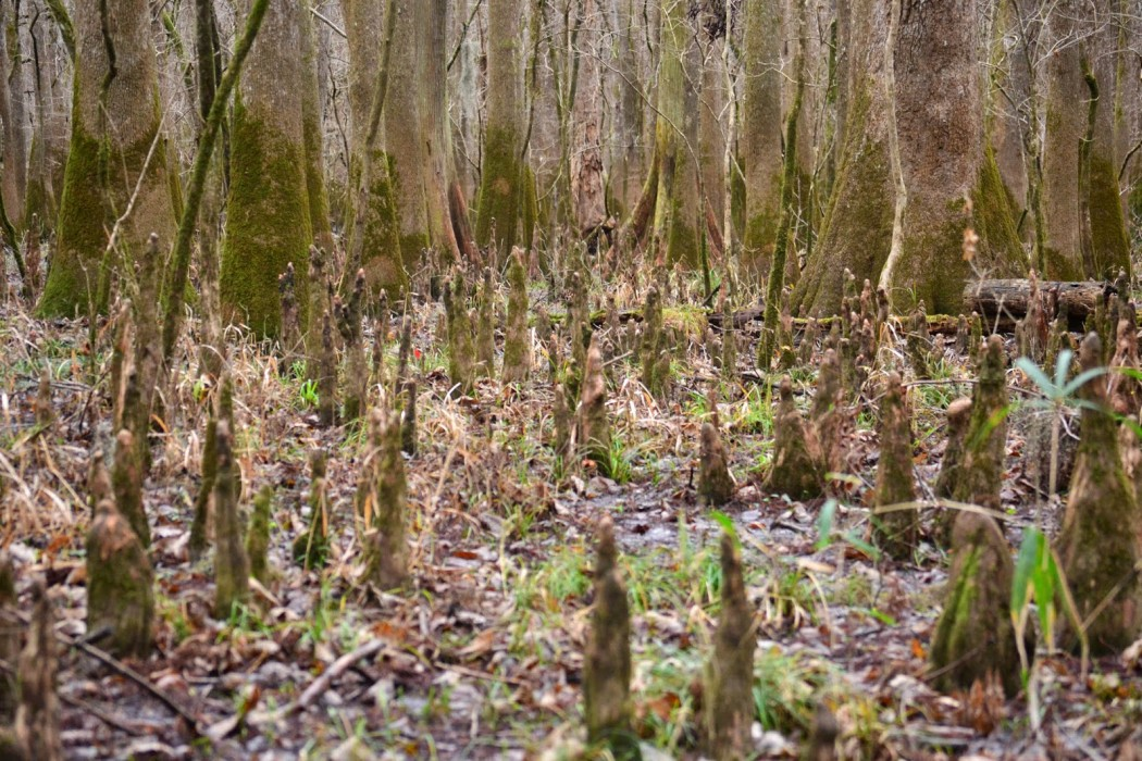 Michael Pisaro - Continuum Unbound, shoots of grass in between forest stumps, trees in background
