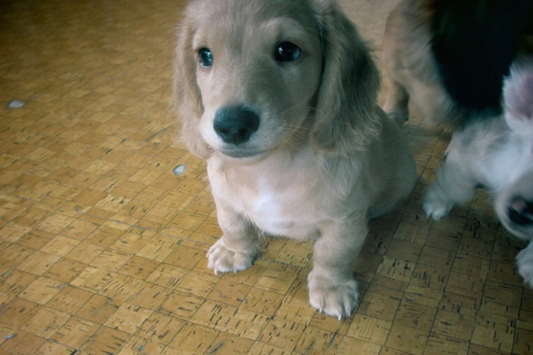 ????(U ???) - music merch ?•??•?•??•?•??•?•??•?•??•?•??•?•??•?•??•?•??•?•??•?•??•?•??•?? , adorable puppy