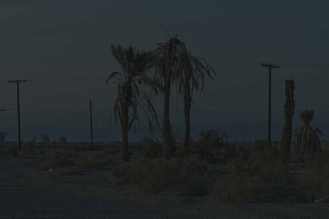 Joshua Bonnetta - Lago, dark blue photo of palm trees in the desert