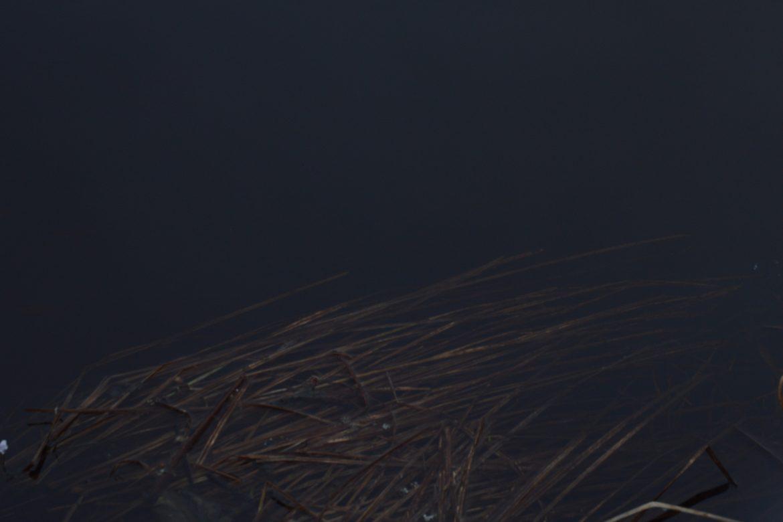 Geneva Skeen - Dark Speech, reeds partly immersed in dark water