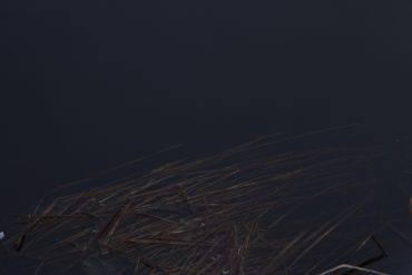 Geneva Skeen - Dark Speech, reeds partly immersed in dark water