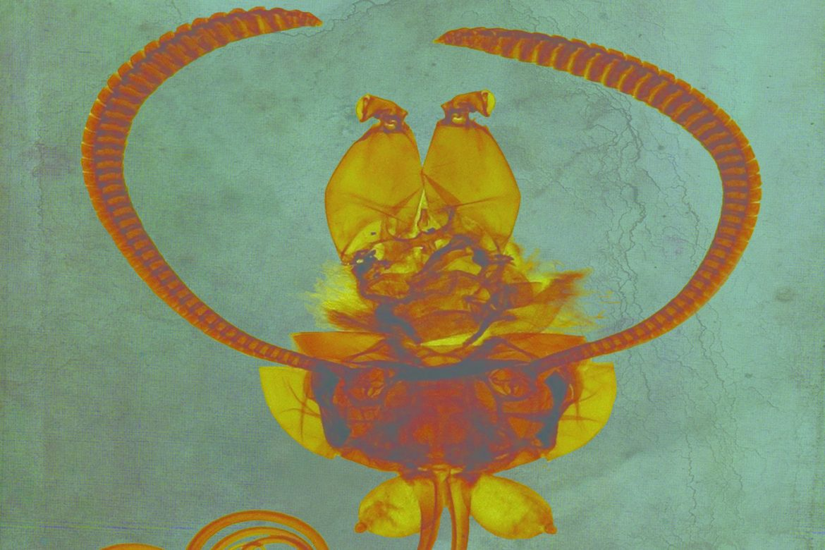 Ruhlmann + Strickland - This Heap Is Greater Light, illustration of a strange orange bug on a turqouise background